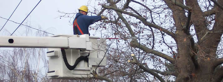 Tree Trimming and Pruning | Tree Care | Tree Service | Spring The Woodlands Texas